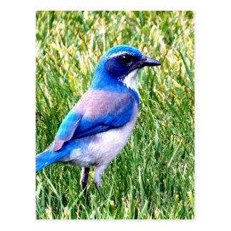 amor verdadeiro de espera do bluebird cartão postal