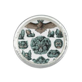 Anéis Bastões por Ernst Haeckel