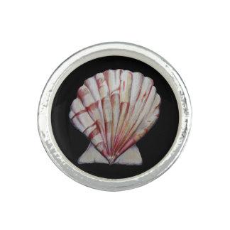 anel do escudo de scallop