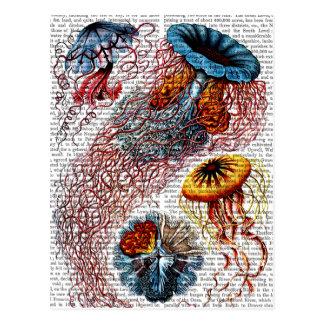 Anêmona de mar cartão postal