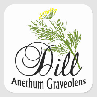 Anethum Graveolens do aneto Adesivo Quadrado