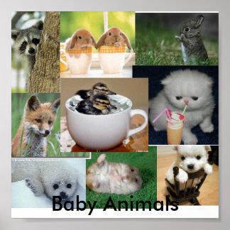 Animais do bebê pôster