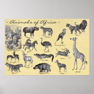 Animais do poster de África Pôster