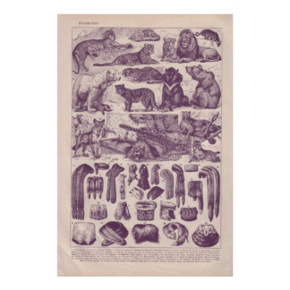 Animais e pele pôsteres