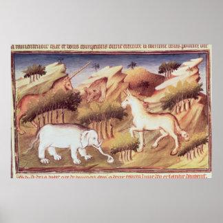 Animais Mythical na região selvagem Poster