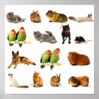 animais pôster