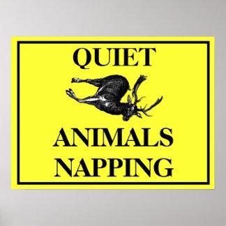Animais quietos que Napping Pôsteres