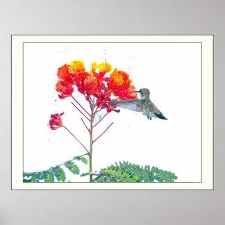 Animais selvagens animais do pássaro do colibri poster