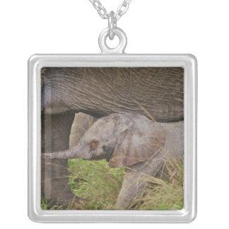 Animais selvagens de África, Kenya, elefante do Colar Banhado A Prata