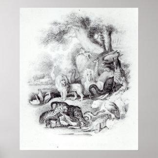 Animais selvagens 'de uma história da terra poster