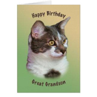 Aniversário excelente - neto gato Ouro-eyed car