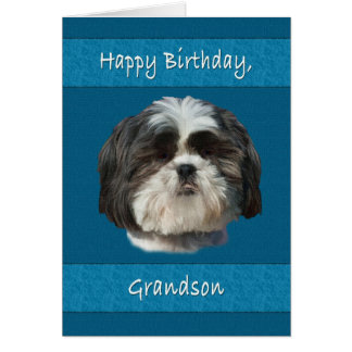Aniversário, neto, cão de Shih Tzu Cartão Comemorativo