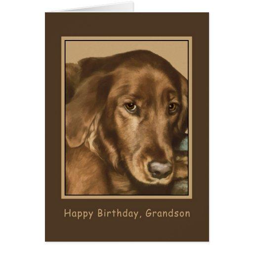 Aniversário, neto, cão irlandês dourado cartao