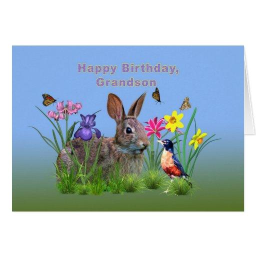 Aniversário, neto, coelho, borboletas, pisco de pe cartões