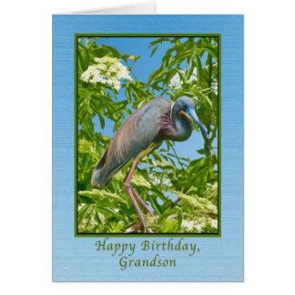 Aniversário, neto, garça-real de Tricolored em uma Cartão Comemorativo