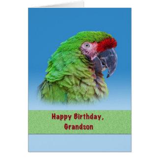 Aniversário, neto, papagaio verde cartão comemorativo
