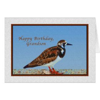 Aniversário, neto, pássaro do Turnstone corado Cartão Comemorativo
