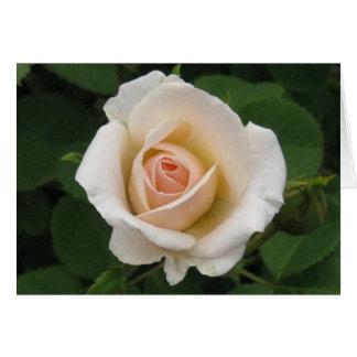 Aniversário-rosa Português-feliz Cartão