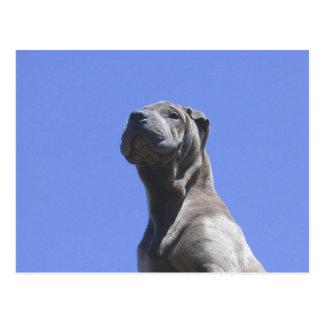 Anos do cão… cartão postal