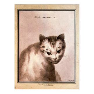 Antique black and white cat, liberty cat postcard cartoes postais