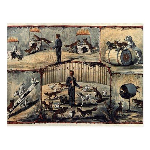 antique circus postcard cartão postal