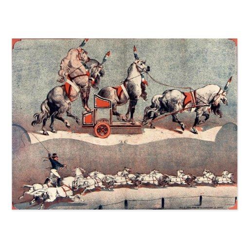 antique horses postcard cartoes postais