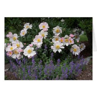 Aposentadoria - cronometre para cheirar as flores cartão comemorativo