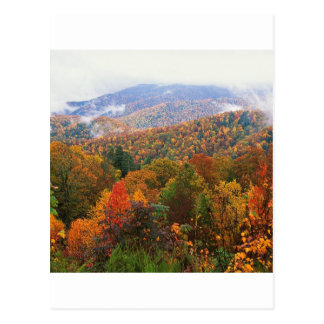 Appalachian luxúria Carolina da paisagem da cena Cartao Postal