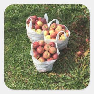 Apple que escolhe o outono cai etiqueta