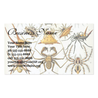 Aracnídeos por Ernst Haeckel, aranhas do vintage Cartão De Visita