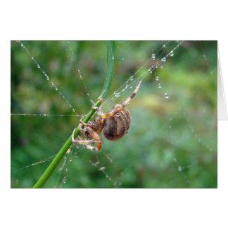 Araneus - aranha do tecelão da esfera cartão