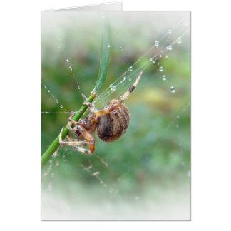Araneus - aranha do tecelão da esfera cartão comemorativo