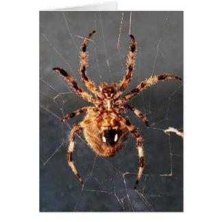 Aranha do tecelão da esfera cartão
