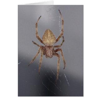 Aranha do tecelão da esfera do jardim cartão