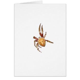 Aranha do tecelão da esfera do jardim cartão comemorativo