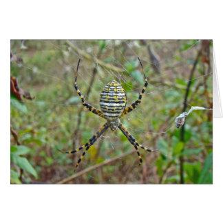 Aranha do tecelão da esfera do trifasciata do cartão
