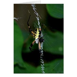 Aranha grande do tecelão da esfera cartão