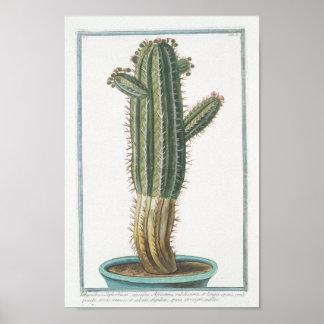 """Arte botânica do poster do cacto do vintage (8"""""""