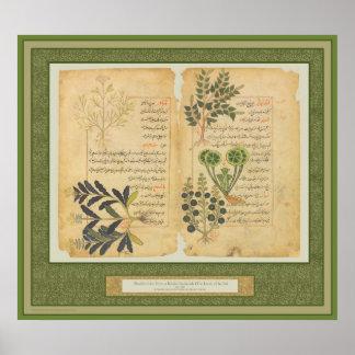 Arte botânica erval antiga do impressão/parede poster