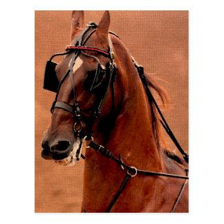 Arte de Saddlebred Digital do chicote de fios do p Cartoes Postais
