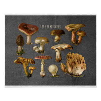 Arte dos fungos, impressão botânico do cogumelo,