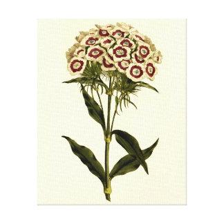 Arte floral doce de William