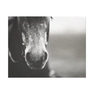 Arte preto e branco da parede das canvas do cavalo impressão em tela