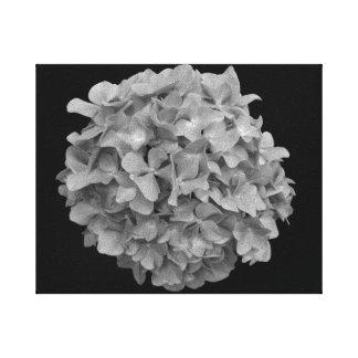 Arte preto e branco do hydrangea nas canvas 8x10 impressão em tela