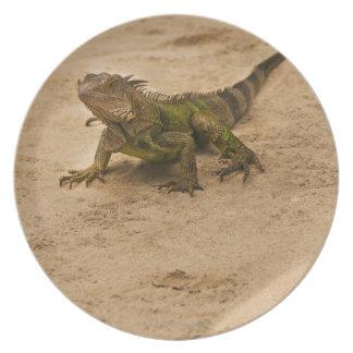 Aruba, lagarto na areia pratos