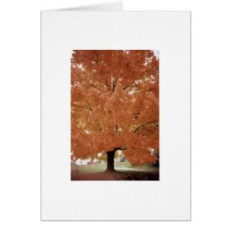 Árvore alaranjada cartão comemorativo