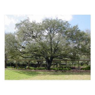 Árvore bonita cartão postal