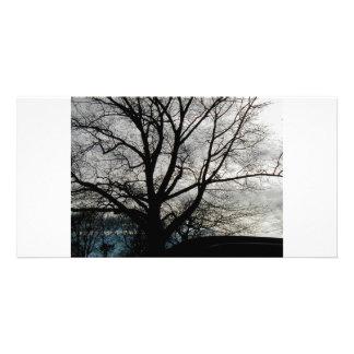 Árvore Cartao Com Foto