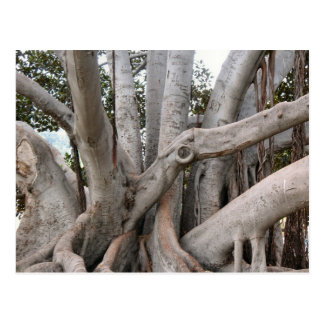 árvore cartao postal