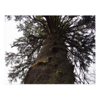 árvore cartoes postais
